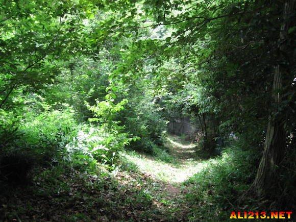 神奇的龙猫居住在茂密的森林里,阳光从树叶的缝隙间洒下来.