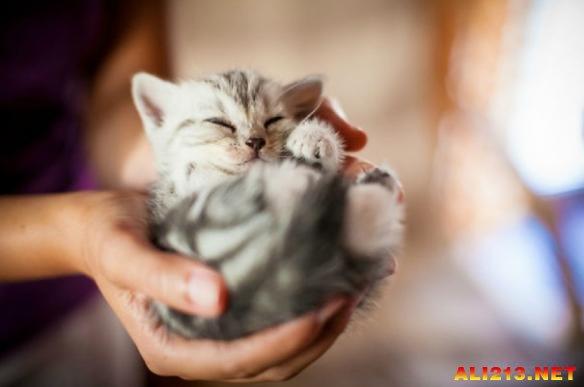 那些可以捧在手心里的小动物