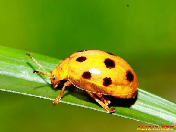 盘点自然界十大最奇特的黄色动物