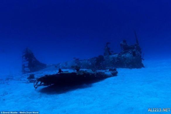 """捡飞机了!美女潜水员发现""""幽灵战机""""沉睡海底70年"""