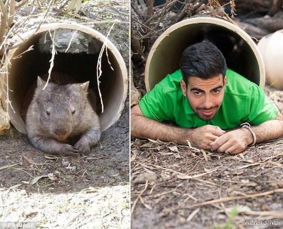 澳洲动物管理员掀起动物模仿秀热潮