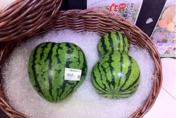 土豪才吃得起?日本人为什么把西瓜当做奢侈品