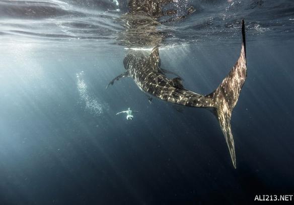 海洋深处的动物