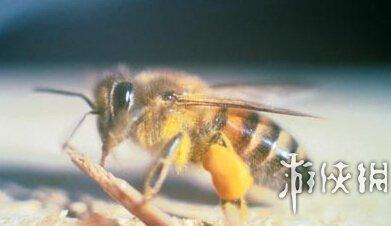 全球最毒的15大动物毒王排行