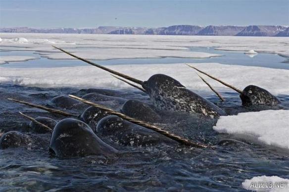 精灵鲨:   出没于阳光照射不到的深海