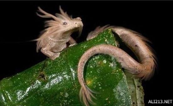 好多都快濒临灭绝了!盘点地球上20种奇特的生物