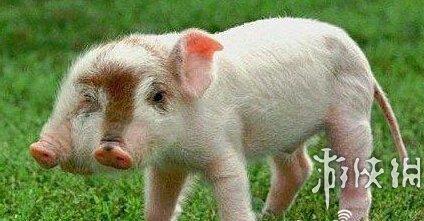 盘点全球罕见的10大连体动物