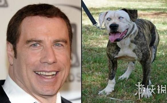 10只几乎跟名人是失散多年双胞胎的爆笑狗狗
