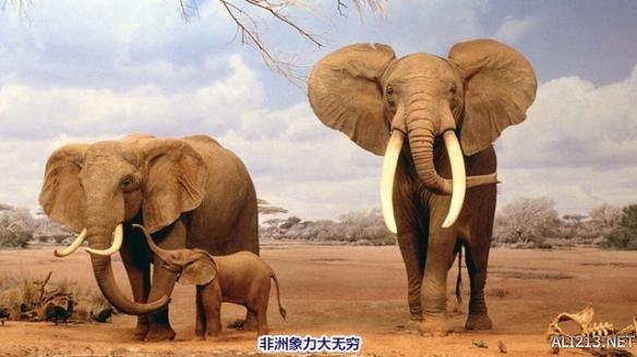 谁才是陆地最强动物?细数世界上十大彪悍陆地动物