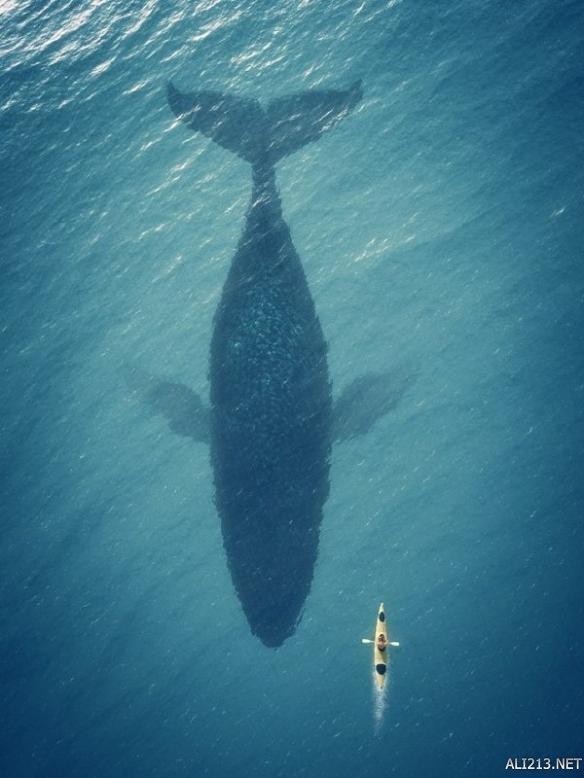 壁纸 动物 鲸鱼 鱼 鱼类 584_778 竖版 竖屏 手机