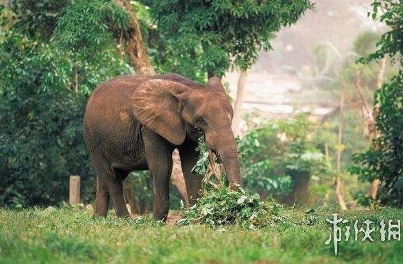 杀导致这些动物濒临灭绝