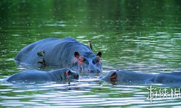 盘点陆地上最危险的10种动物
