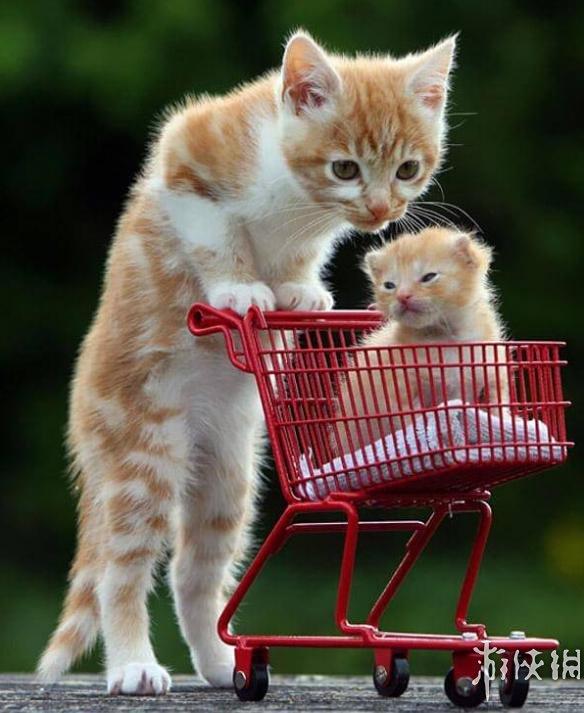 情暖人心,太萌太有爱!盘点27张动物世界温馨亲子照