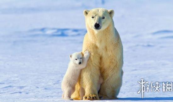 盘点地球上出现过的13种最大动物
