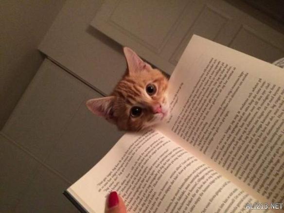 小编已经很久没看书了都在看漫画233不过猫咪挡在电脑前,或是对着