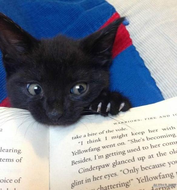 别看书,看我!那些陪伴在猫奴身边妨碍读书的猫们