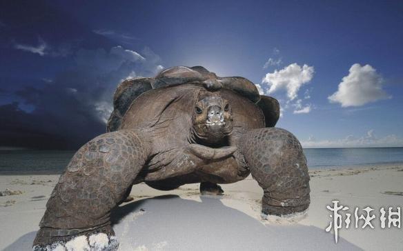 世界十大寿命最长的动物排名!千年的王八万年的龟