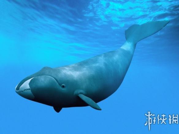 鲸鱼的身体结构图名称