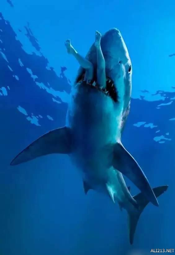 壁纸 海底 海底世界 海洋馆 水族馆 564_821 竖版 竖屏 手机
