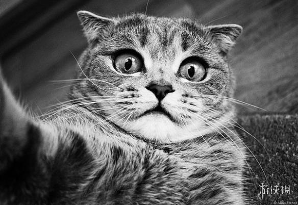 """猫咪""""表情帝""""吐舌卖萌仿佛二哈附体 圈粉实力爆表"""