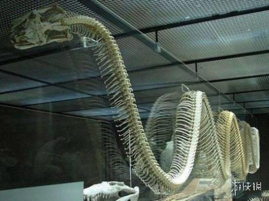 1,亚马逊森蚺   世界上最长的蟒蛇,还有一种比它稍微短一点儿的就是