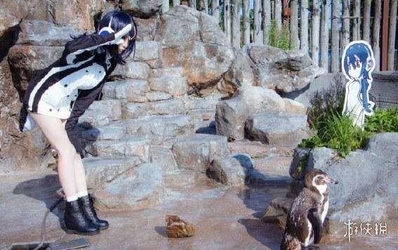 网红老年企鹅守护《兽娘动物园》呼噜噜看板