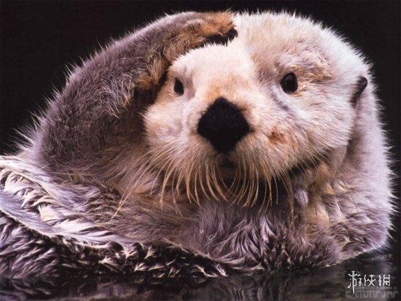 萌图图解各种动物捂脸动作背后原因!