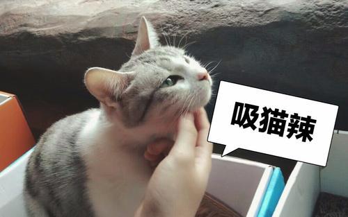 科普顺便云吸猫:权威机构研究称撸猫可缓解老年痴呆