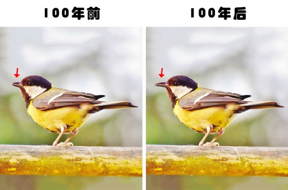 7,山雀在近百年来发生了很大的变化金龙鱼面包虫一直图片