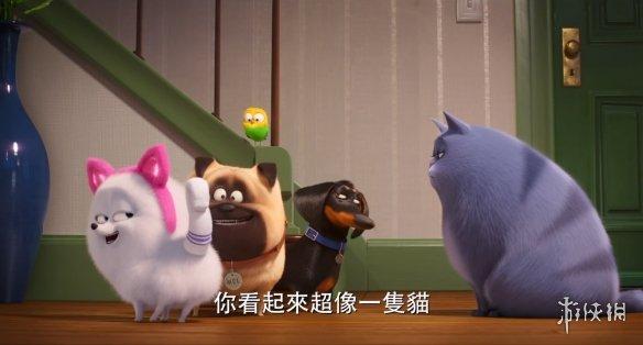 如何正确的做一只猫?《爱宠大机密2》猫咪教学篇预告