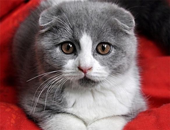 最温柔的猫_易烊千玺撸猫侧颜,眉眼间全是温柔,活得不如猫系列