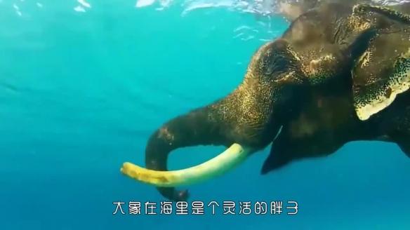 冷知识科普大盘点出炉 大象在海里是个灵活的胖子