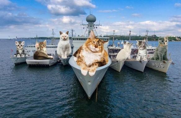 日本网友将猫咪巨大化P入军事照片 特别感官带给你不同体验