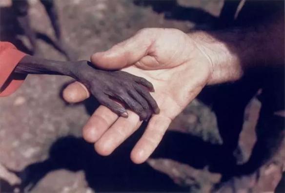 有人奢侈享受有人餓死!13張觸動人心的感人照片!