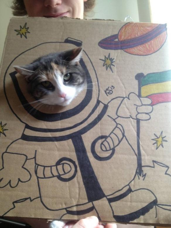 双十一后纸箱成堆?挖个洞画几笔让猫主子瞬间变戏精