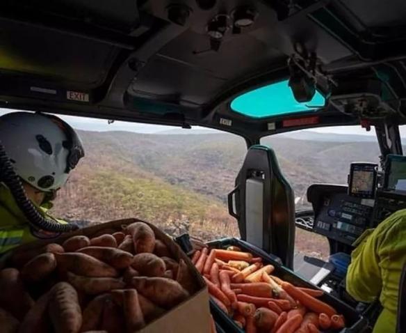 澳洲空投2.2吨红薯胡萝卜 为救助山货受灾的小动物!
