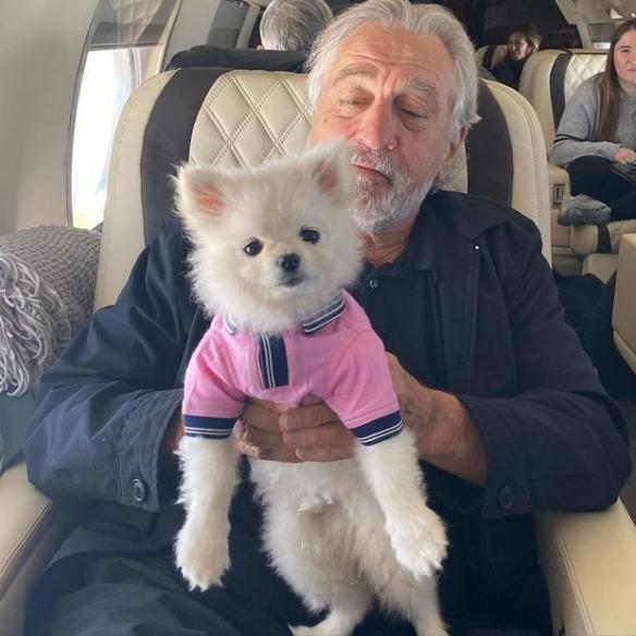狗生赢家!它是目前全网最红的狗 马丁爱它胜过奥斯卡