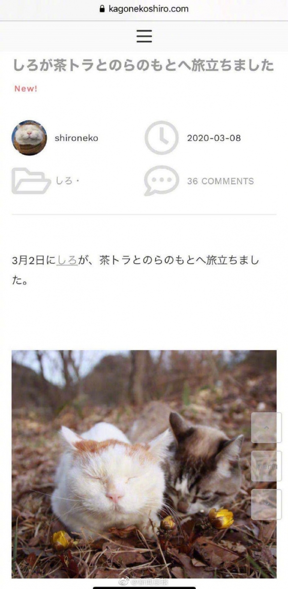 """日本网红猫""""猫叔""""去世 淡定悠闲的神态吸粉无数"""