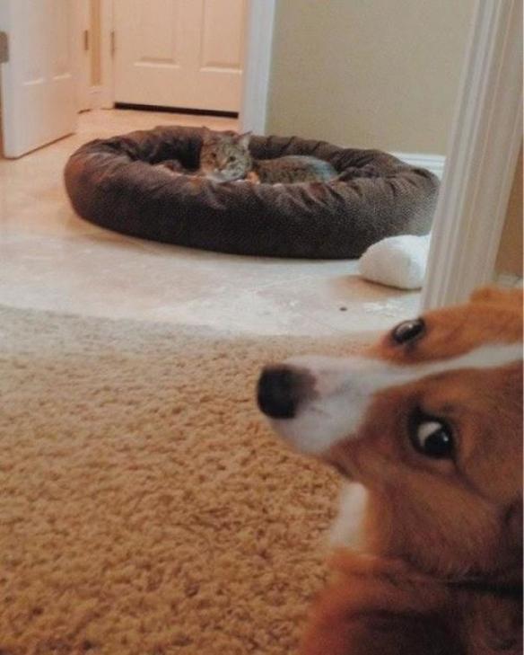也不是没尝试!20张猫占狗巢:被侵门踏户的卑微!