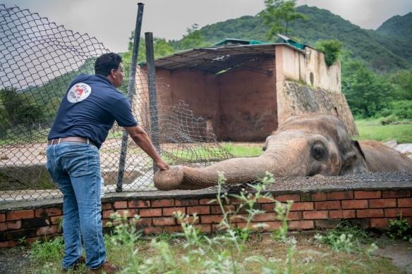 """受困35年!世界上""""最孤独""""的大象被人道组织解救!"""