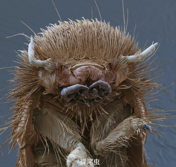 SAN值不保!显微镜下的生物特写 看完人都不好了!