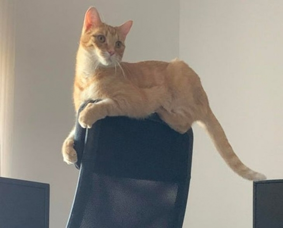 想知道猫咪喜欢纸箱的原因吗?小空间就像妈咪的怀抱