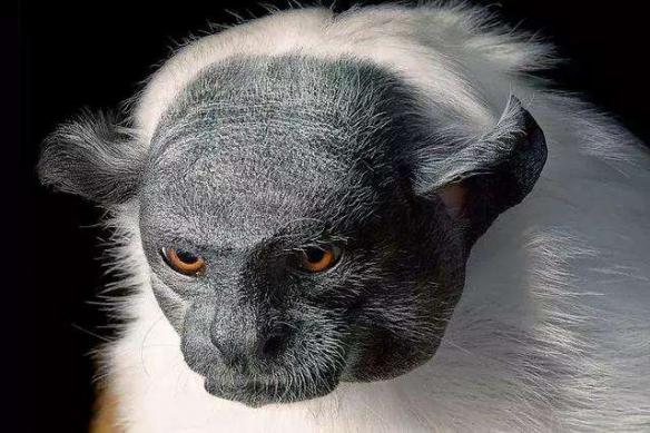 世界自然基金会:野生动物灭绝了2/3 人类是罪魁祸首