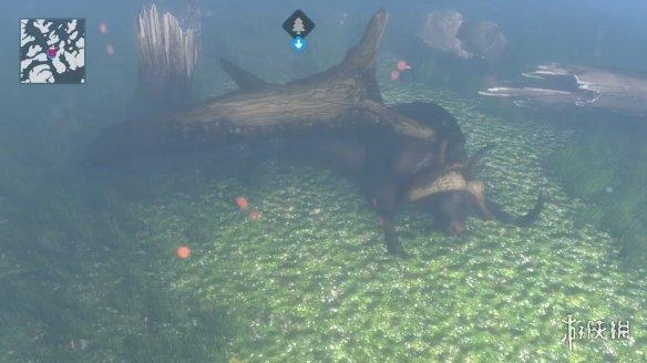 兽医救助模拟游戏《动物救援》2021年发售!预告赏
