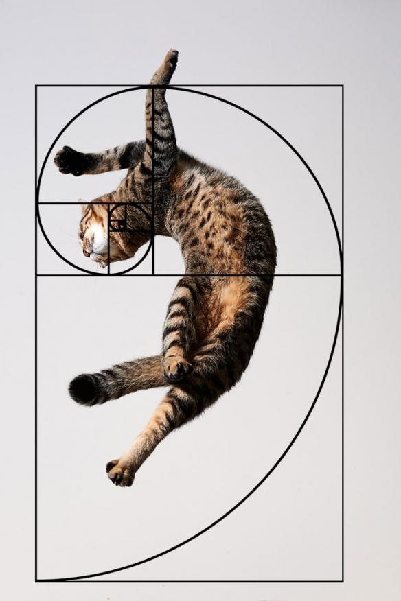 越看越神奇的猫咪巧合照 难不成喵星人与数学有关?