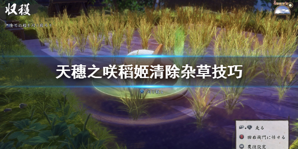 《天穗之咲稻姬》杂草怎么清除?清除杂草技巧