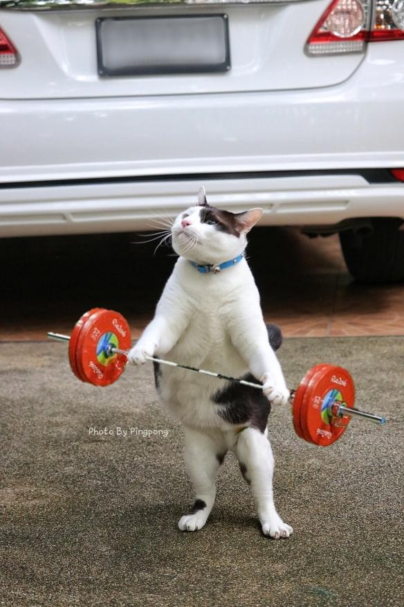呕吐物高能预警!泰国摄影师专拍自家猫主子丑照