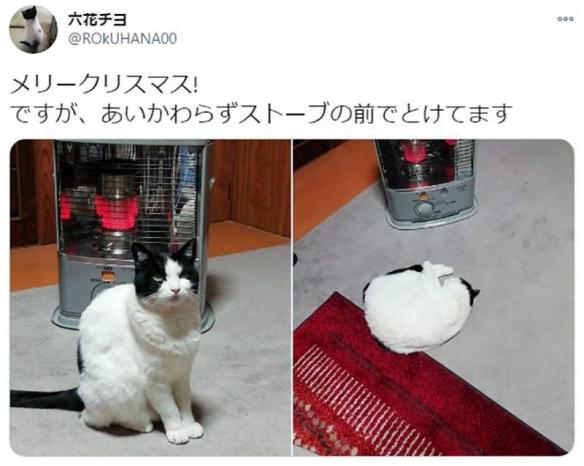 猫咪烤糊了怎么办? 火炉前取暖的喵星人引网友热议