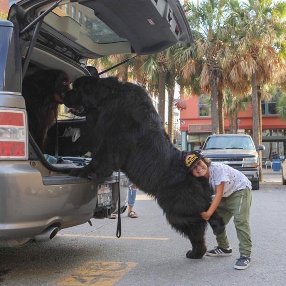 铲屎官和大型犬的日常照 拥抱变成了甜蜜的负担!