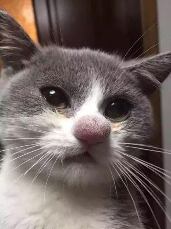 贪玩却惨遭蜜蜂变脸的15只宠物 肿的奇形怪状太喜感